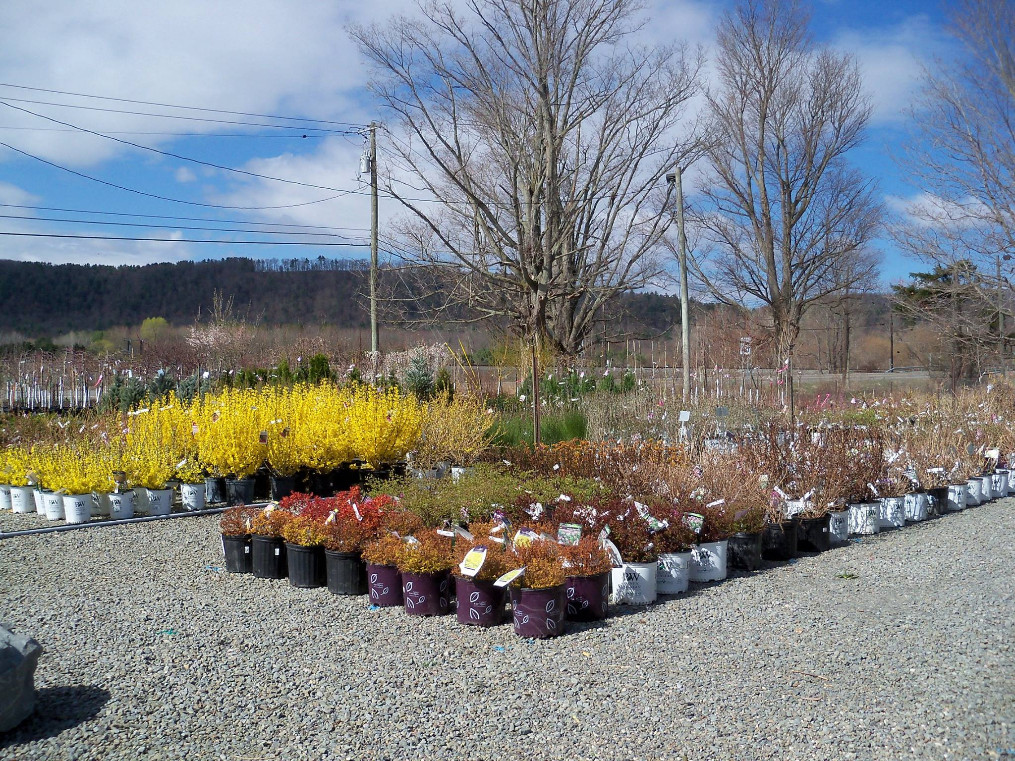 Superbe Donu0027t See What Youu0027re Looking For? Let Us Special Order For You. Visit The  Garden Center For Details On Perennials And Annuals. Tioga Gardens